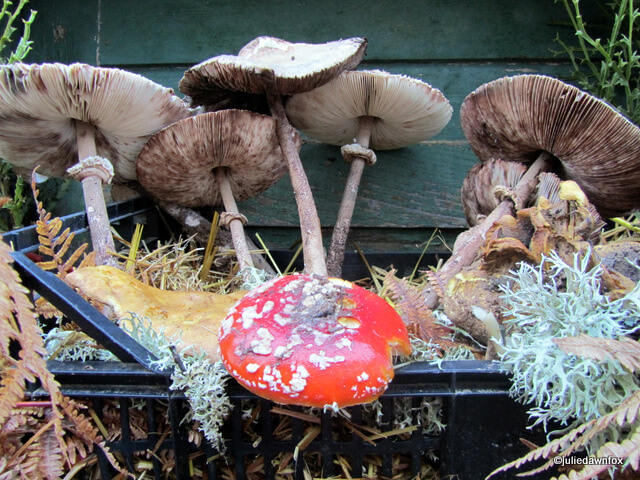 Miscaros mushroom festival in Central Portugal