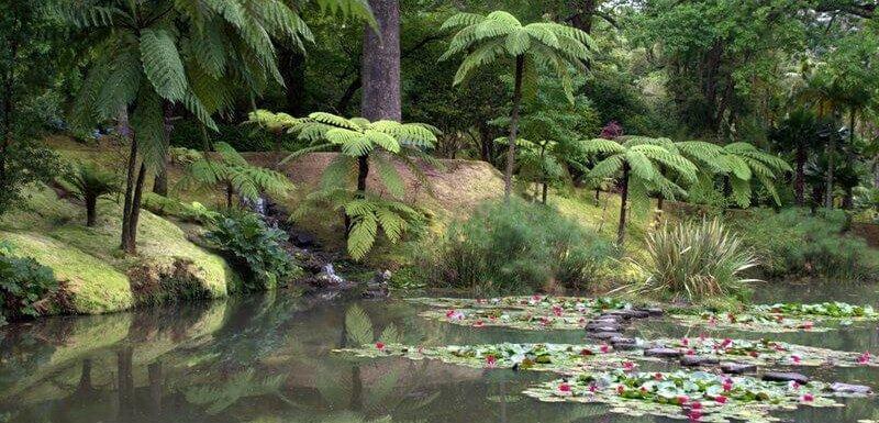 Mossy banks, Terra Nostra Gardens, Furnas, São Miguel, Azores, Portugal. Photo by Julie Dawn Fox