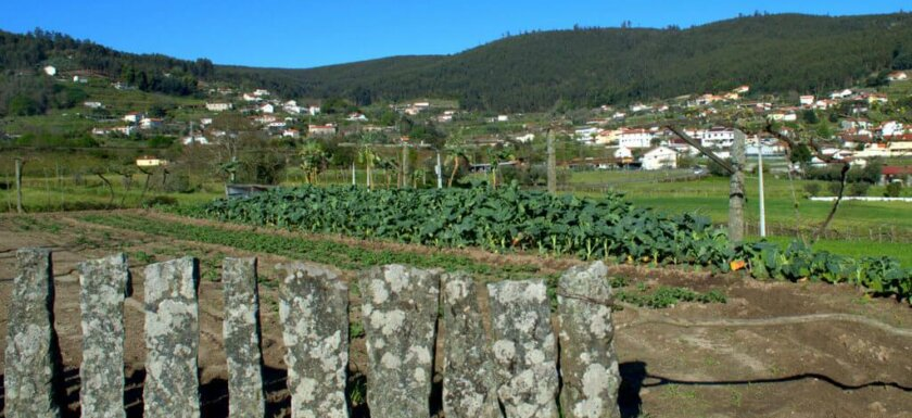 Granite slabs as fence for cabbage fields, Quintiães, Portugal