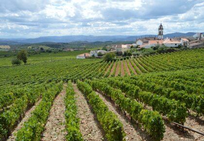 Rows of grape vines surround Favaios village, Douro wine region, Portugal