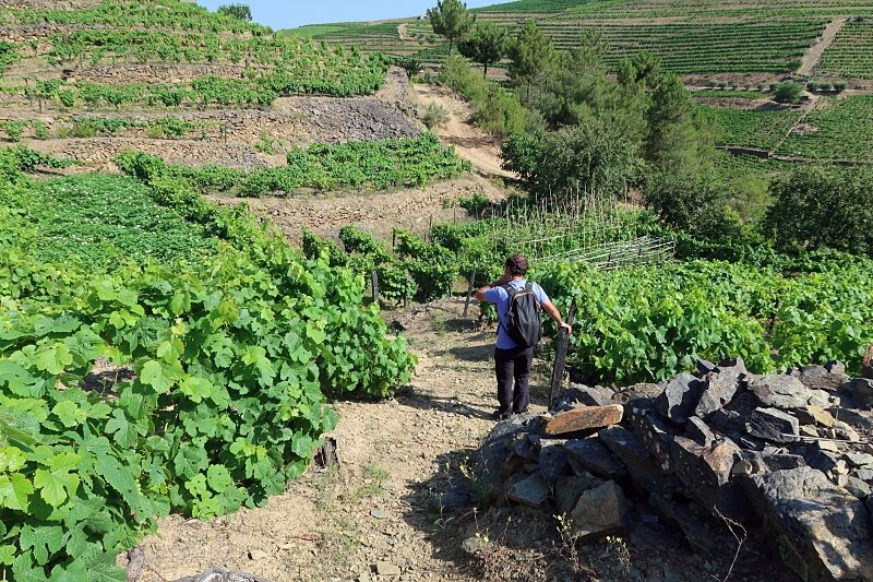 António's family's vineyard terraces and vegetable plots