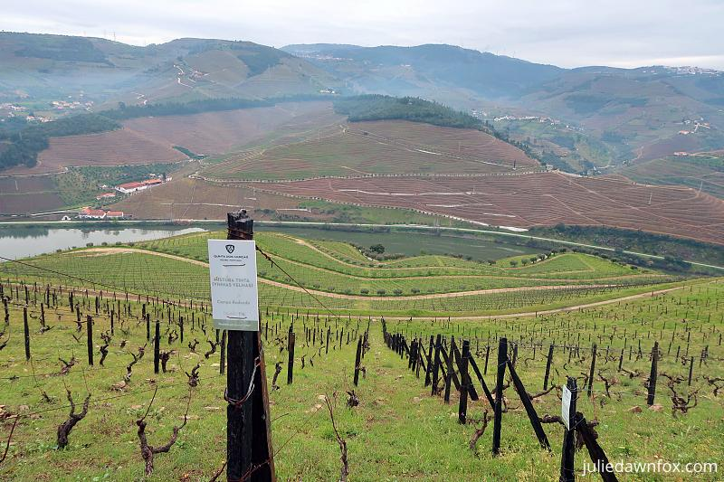 Vertical planting and field blend vines, Quinta dos Murças, Douro wine region