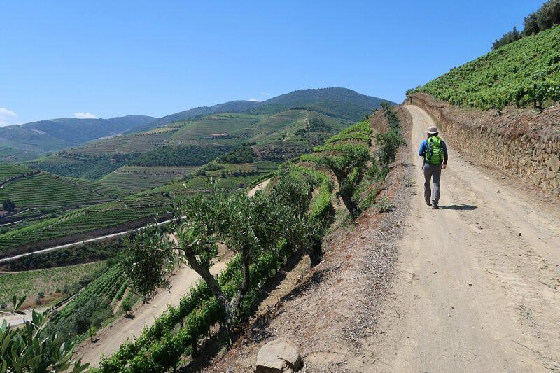 Man Hiking in vineyards in Portugal