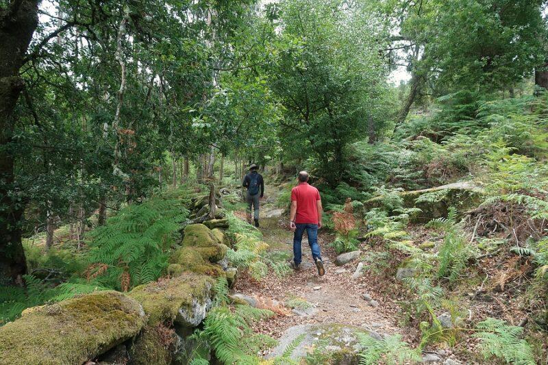 two hikers walking in the greenery of Peneda-Gerês National Park