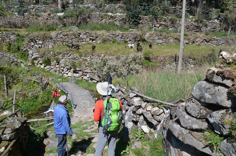 Villagers-and-goats-Paradela-Peneda-Geres-National-Park