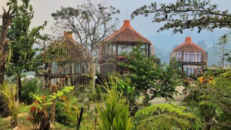 Bubu Jungle Honeymoon