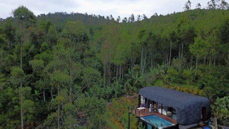 Vila Bubu Jungle - Sayang Manuk
