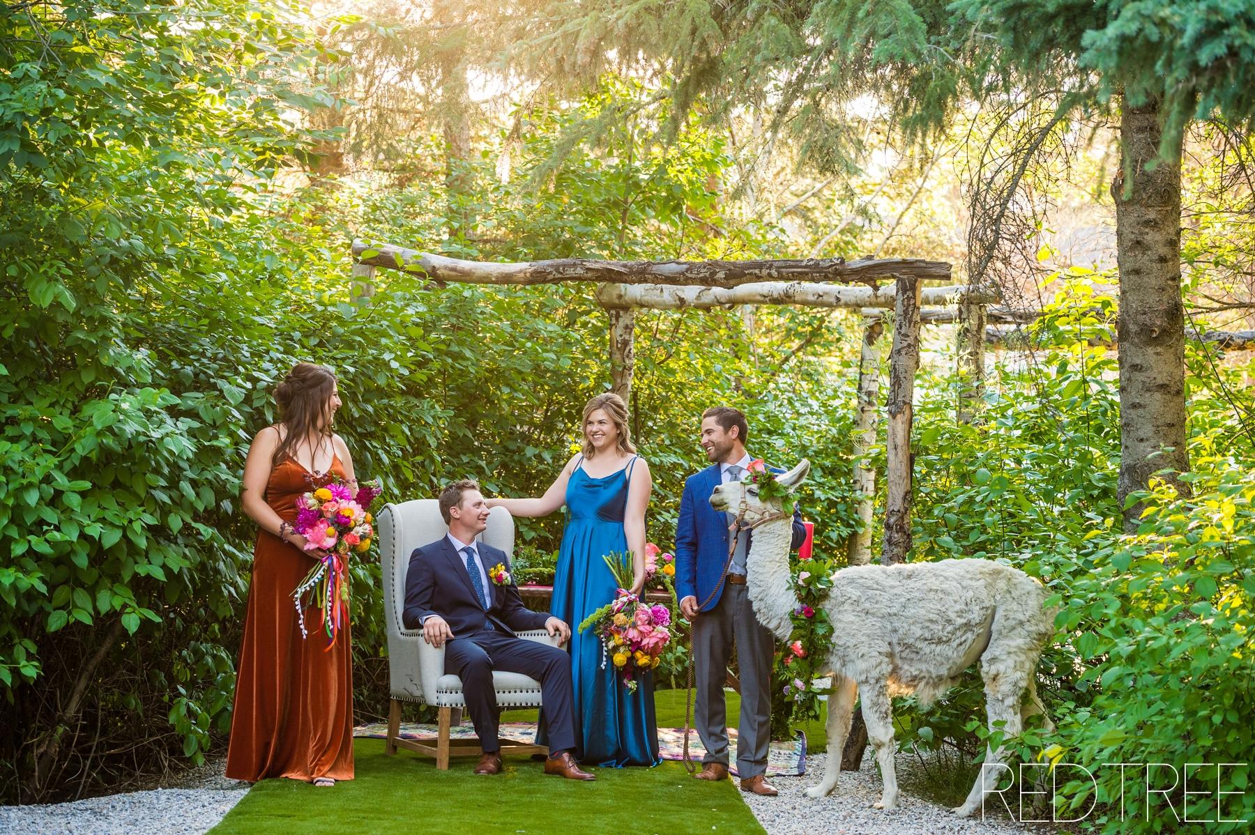 The Whitewood Barn Stylized Wedding Session: Llama Wedding Photography