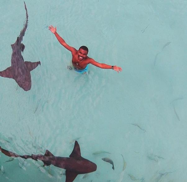 sharks lil duval