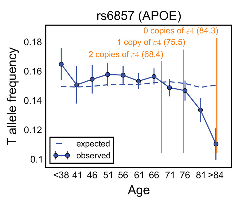 Human Evolution Continues!…Or more exactly: Only two loci in the whole genome influence longevity