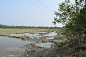 Site of proposed sustainable desalination project in the Sundarbans, West Bengal
