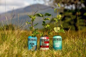 BrewDog cans in field on forest site