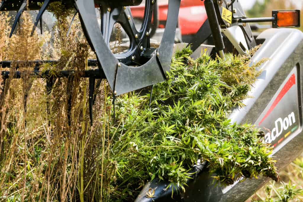 Close-up of hemp field harvested with tractor. (Photo credit: Heather Eaton.)
