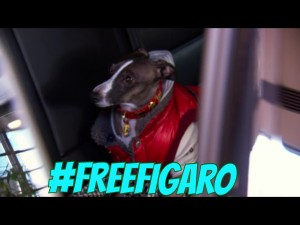 #freefigaro figaro real housewives melbourne