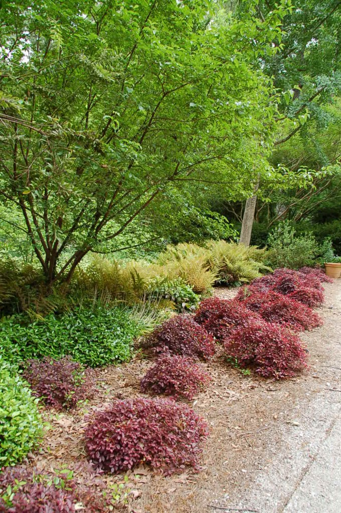 Southern Gardens Inspiration