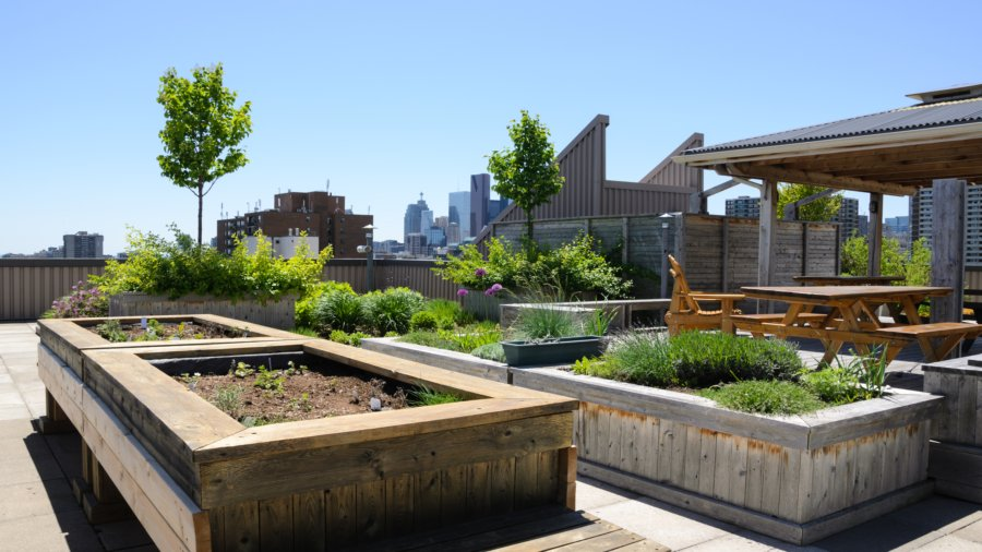 Getting Started on a Rooftop Garden3
