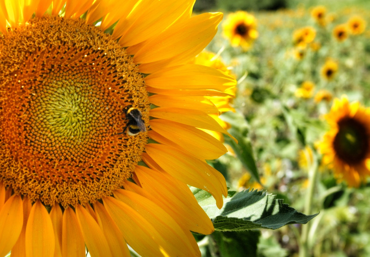 How to Attract Bees to Pollinate Your Garden