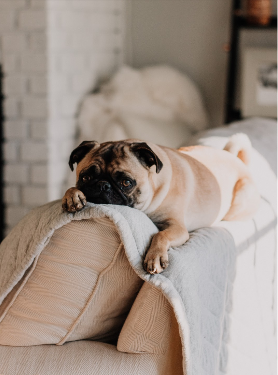 How to Make Your Home Pet Friendly