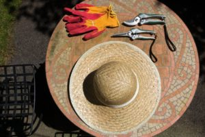 The Garden Guru: Dos and Don'ts for Beginners