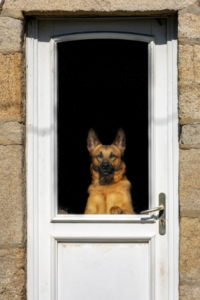 Pet Doors: How to Choose the Right One For You