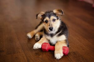 Do's and Don'ts of Moving with Dogs