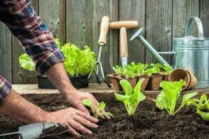 5 Tips To Help You Make The Most Of A Small Garden