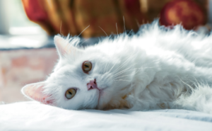5 Steps to Finding the Right Pet Sitter