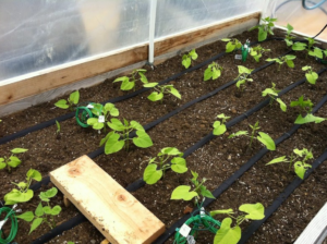 How to Set Up an Irrigation System for Container Gardening