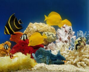 What You Need to Start Your First Aquarium