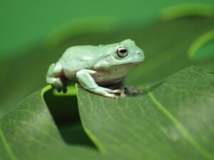 5 Common Mistakes Gardeners Make When Finding Reptiles In Their Garden