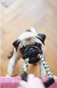 4 DIY Treat Puzzle Toys Your Dog Will Love