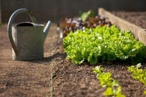 Unique Gardening Problems and How To Solve Them