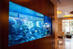 Consider Adding an Aquarium into Your Wall? These Are the Things You'll Definitely Need