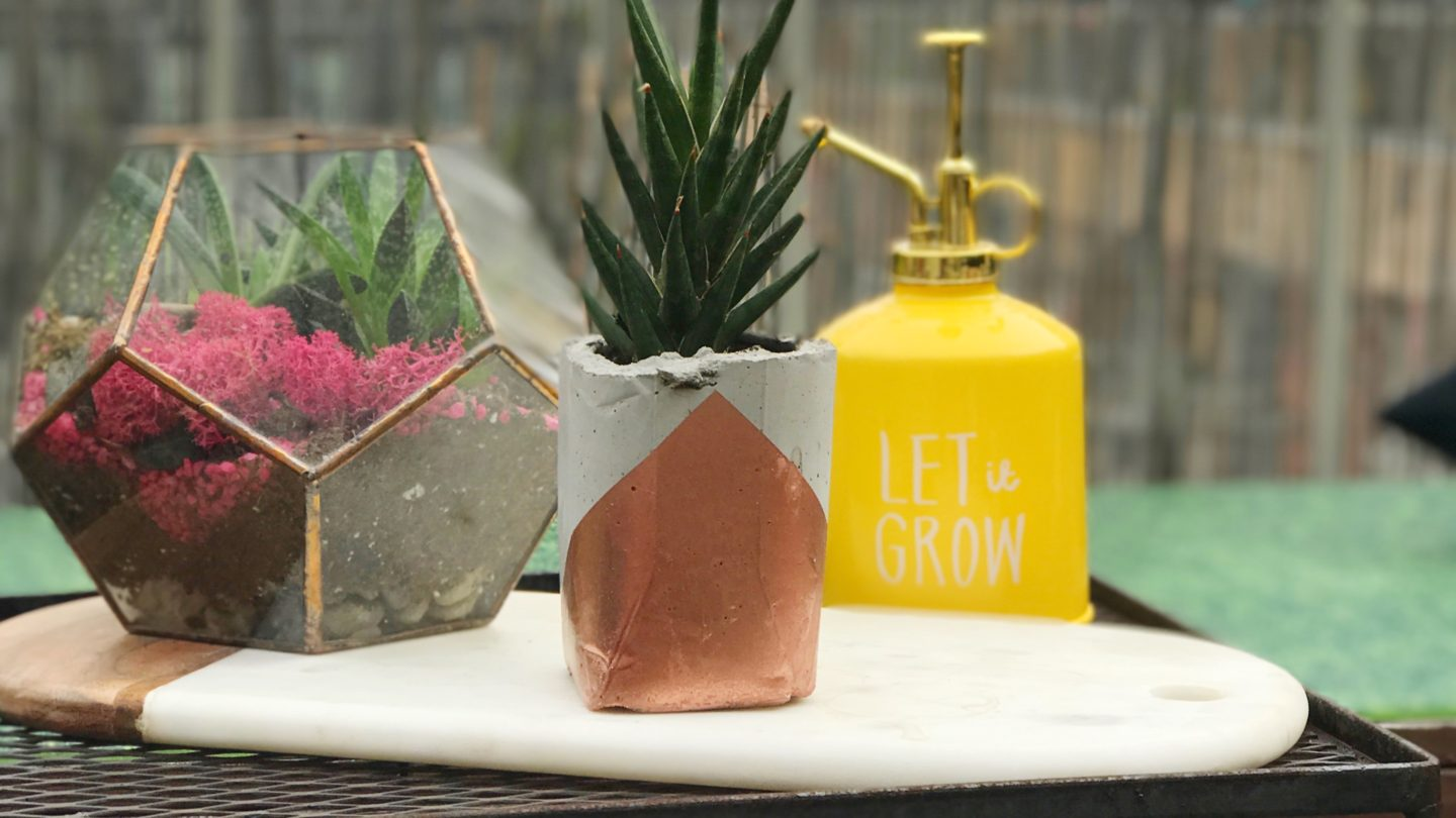 We Made Cement Planters! ?