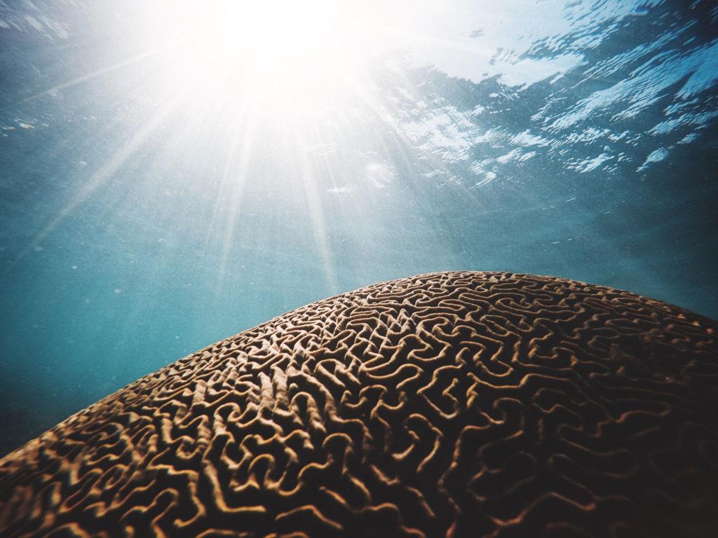 Coral looks like brain underwater   nextlevelwarrior.com