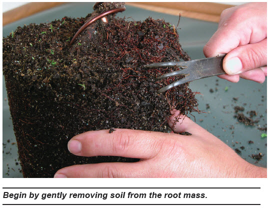 Repotting Workshop March 12 2017