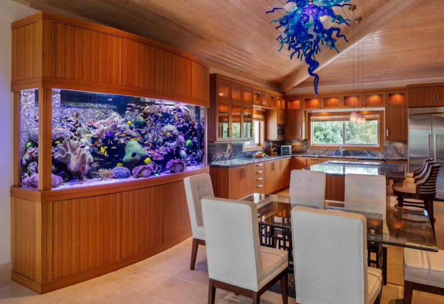 800 Gallon Living Coral Reef