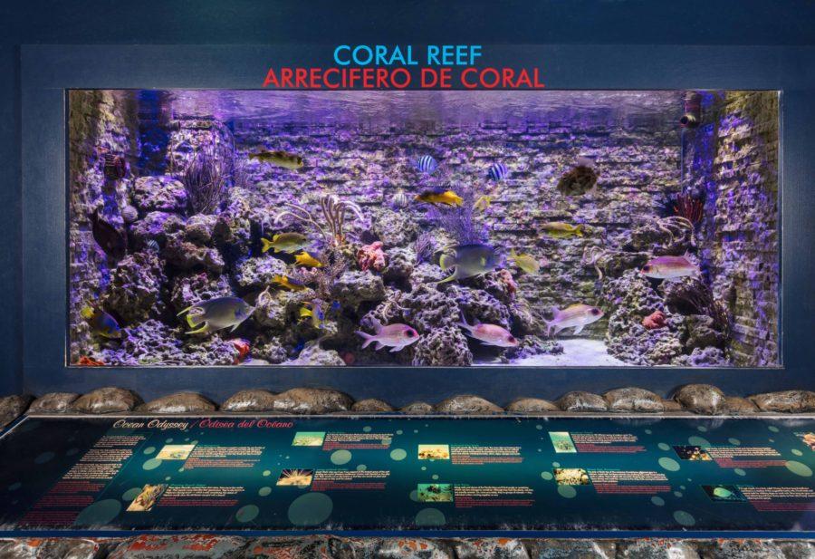 Miami Children's Museum Coral Reef