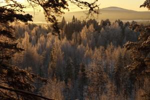 tree scape sunrise