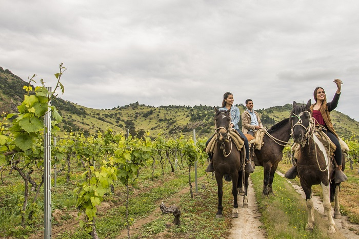 Viñas de Chile