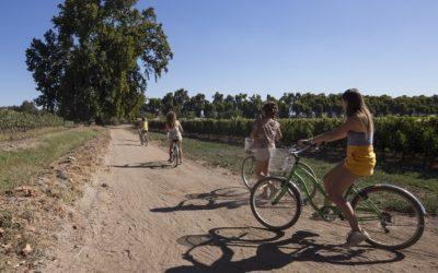 Exitoso desarrollo de primera rueda de negocios virtual de Enoturismo Chile
