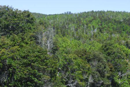 Parque Nacional Alerce Costero, Región de Los Ríos
