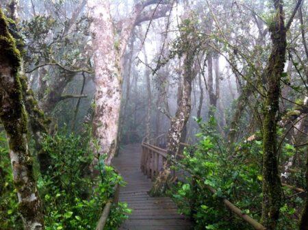 Parque Nacional Bosques de Fray Jorge, Región de Coquimbo