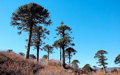 CONAF busca desarrollar marca de certificación en Reservas de la Biosfera