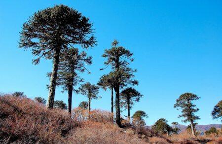Reserva de la Biosfera Araucarias