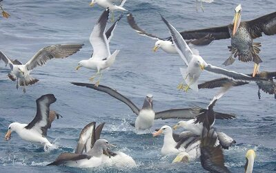 Barrio del Mar se suma a la celebración de Día Mundial de los Océanos