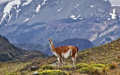 Parque Nacional Patagonia elegido entre 100 destinos más extraordinarios