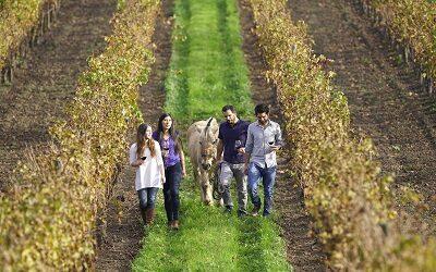 Viñas del Valle del Maipo reabren para celebrar el Día Nacional del Vino