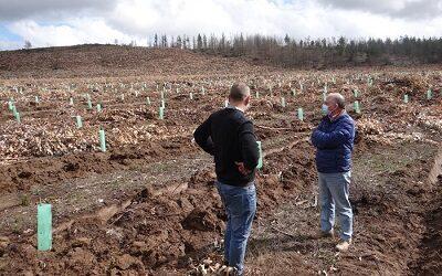 CONAF reconvierte 358 hás de plantaciones a bosque nativo en RN Lago Peñuelas