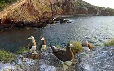 Riviera Nayarit: programa para combatir estrés a través de la Ornitología
